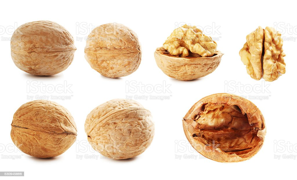 Walnut isolated on a white background, collage stock photo