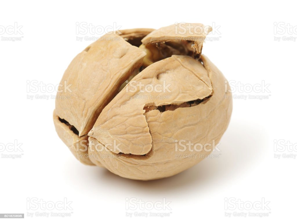 Walnut isolated on the white. With clipping path. Collection stock photo