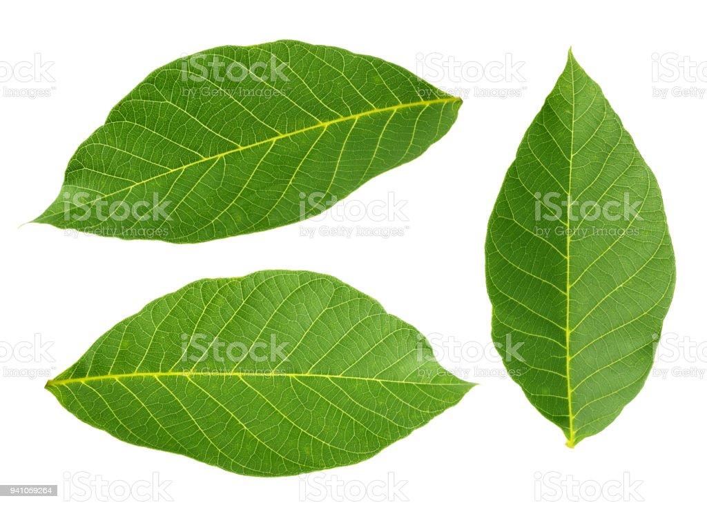 walnut leaves isolated on white background stock photo