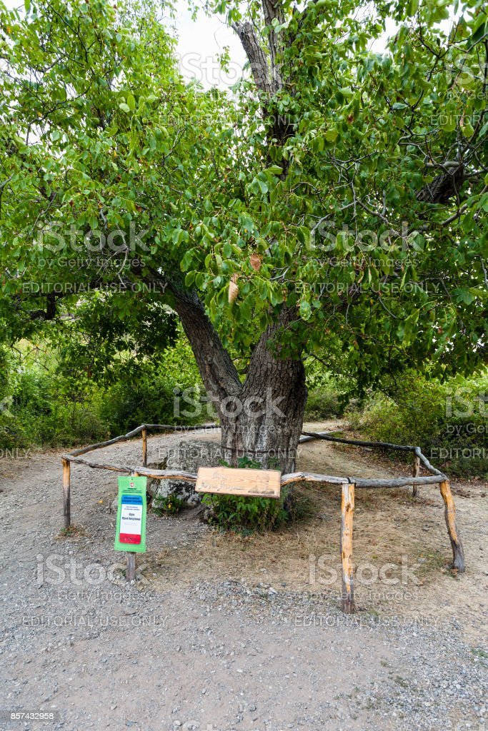 walnut tree in natural park The Valley of Ghosts stock photo
