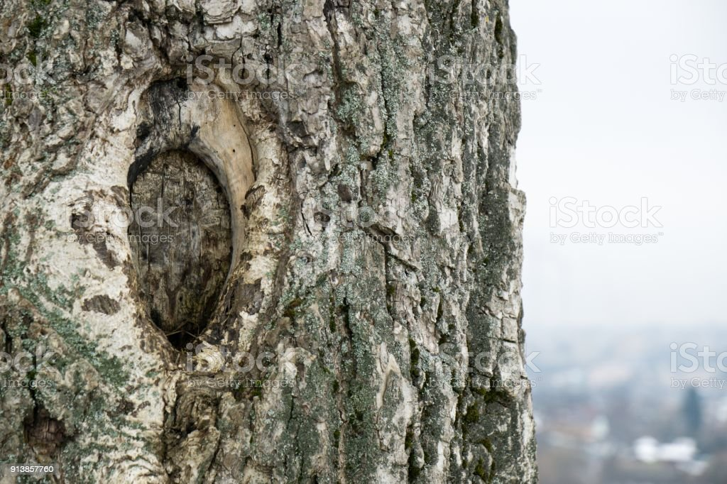 Walnut Tree Trunk Stock Photo - Download Image Now - iStock