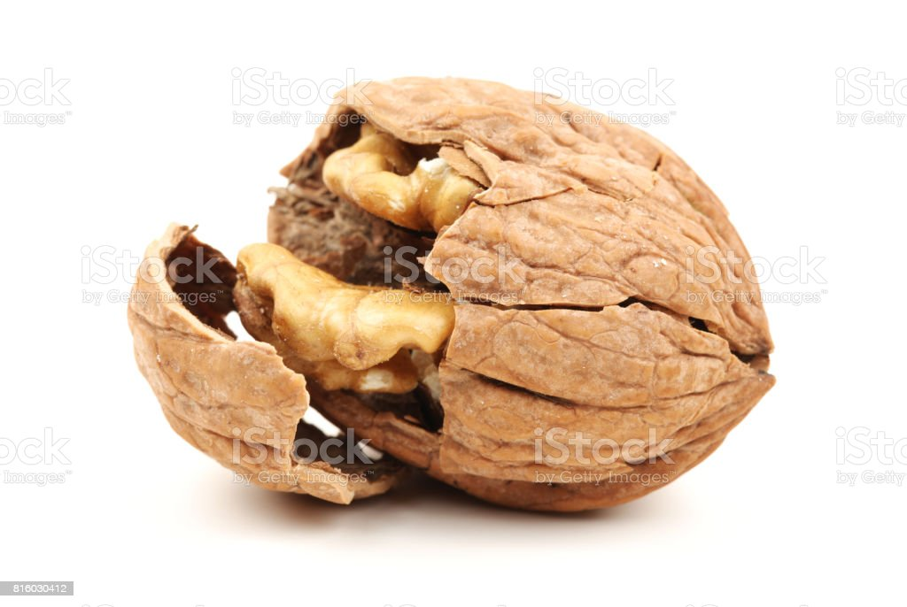 Walnut White Background stock photo