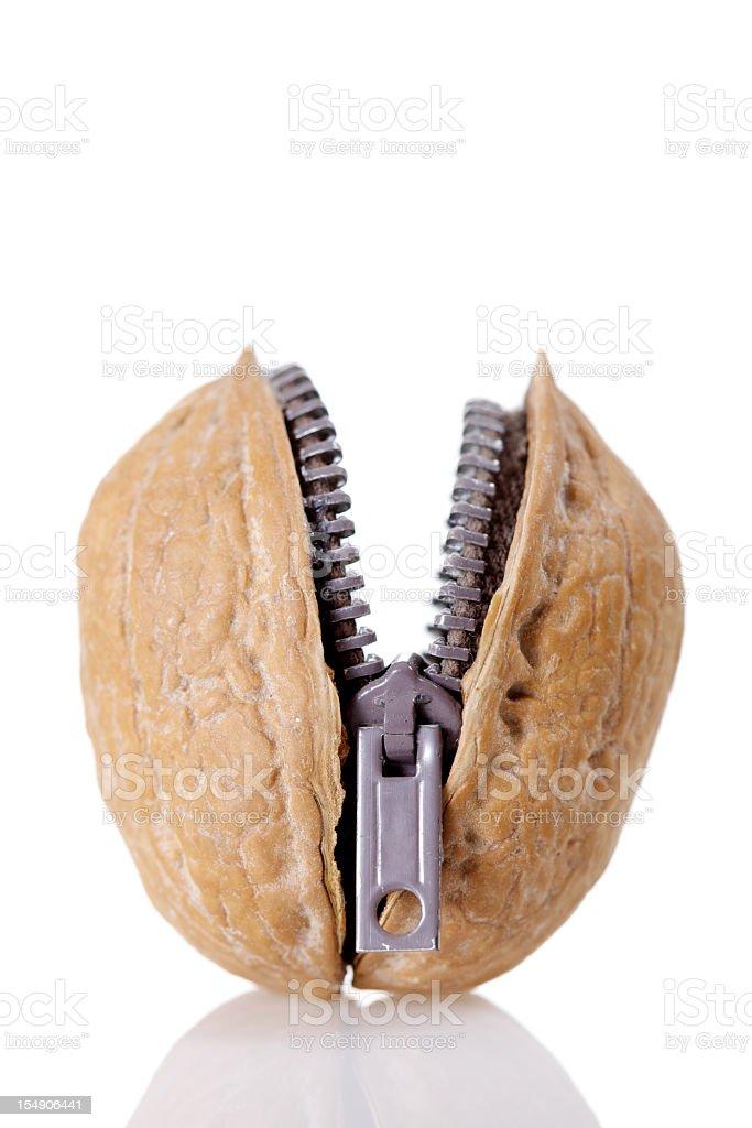 Walnut Zipper royalty-free stock photo
