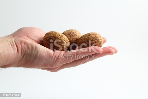 walnuts food nut in hand on white background isolation
