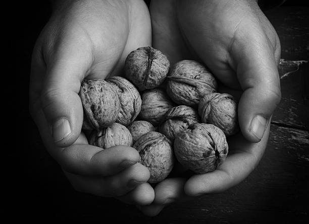 walnuts in hands stock photo