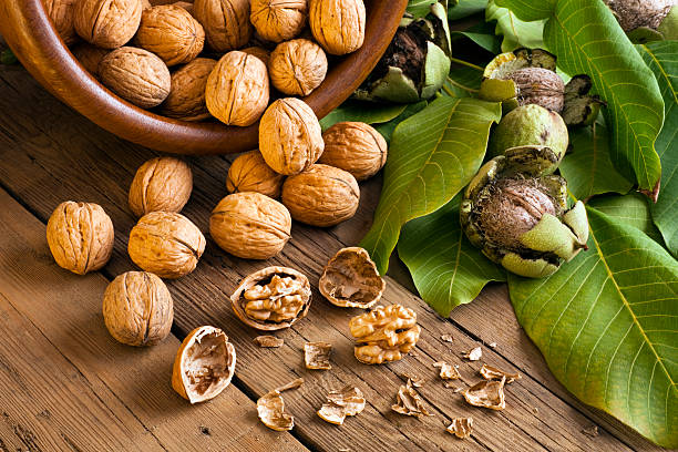 Walnuts Walnuts walnut stock pictures, royalty-free photos & images