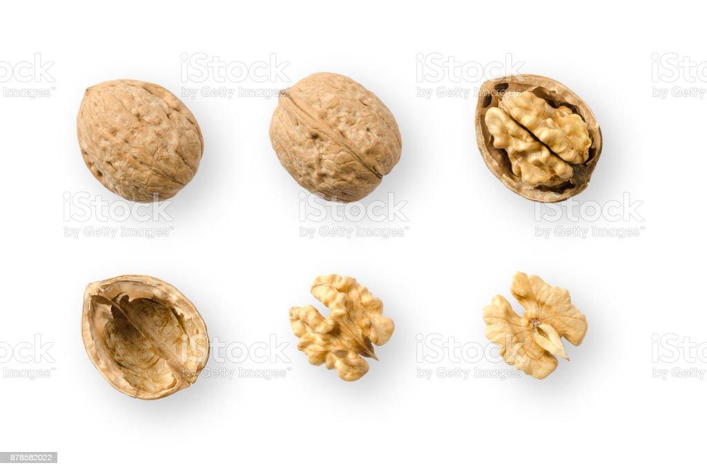 Walnuts, whole and opened, on white background stock photo