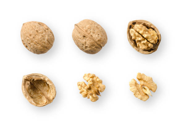 walnuts, whole and opened, on white background - walnut stock photos and pictures