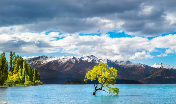 Wanaka lake tree New Zealand Famous Wanaka lake on the south island of New Zealand with a tree groing in the water verliefd stock pictures, royalty-free photos & images