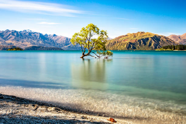 Wanaka Tree That Wanaka Tree everyone loves reflection lake stock pictures, royalty-free photos & images