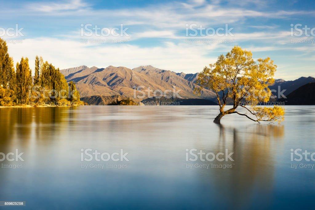 Wanaka Tree stock photo
