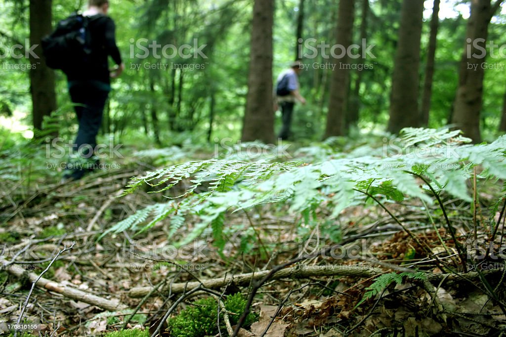 Wanderers in the wood with fern stock photo