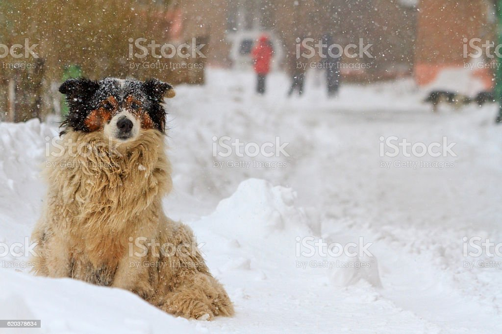 wandering dog freezing in the snow in a  storm foto de stock royalty-free