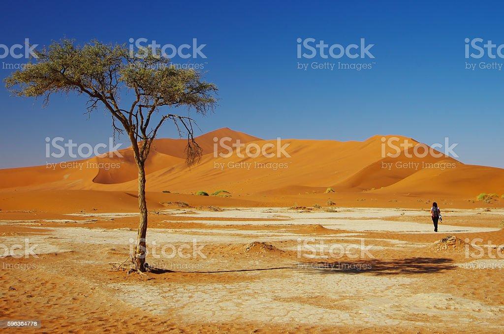 Wandering in the desert stock photo