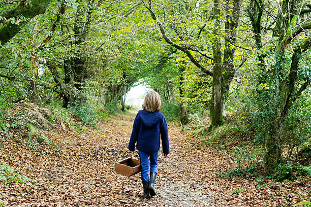 Wandering in the woods A young child wanders alone through the woods, holding a basket filled with berries and mushrooms she has gathered. foraging stock pictures, royalty-free photos & images