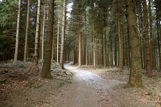 Wanderweg im Taunus am Limes Hiking path in the german Taunus mountains near historic roman wall Limes monoculture stock pictures, royalty-free photos & images