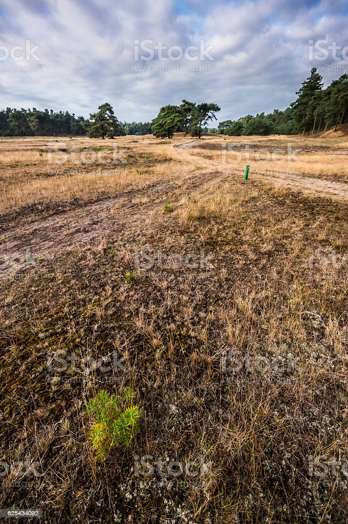 Wanderwege in De Hoge Veluwe stock photo