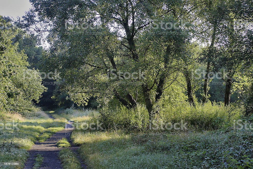 Wandsworth Common footpath in early morning stock photo