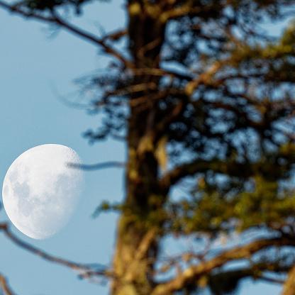 A waning Moon