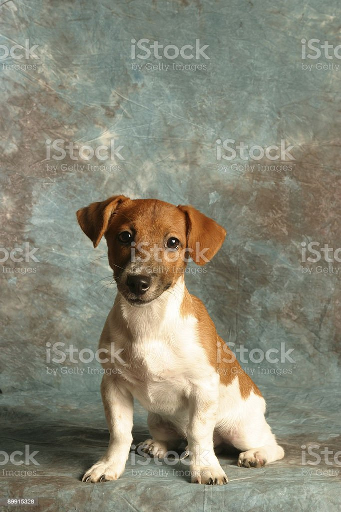 I want a dog royalty-free stock photo