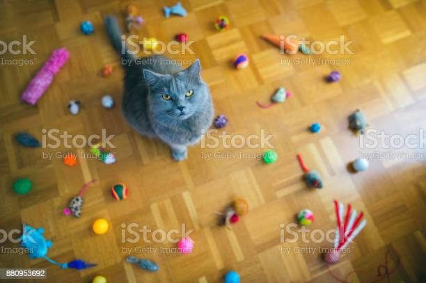 Want new toy picture id880953692?b=1&k=6&m=880953692&s=612x612&h=tj ltizp45ecw1kmxewhsdx7pl7dl1vkcpqntliq17u=
