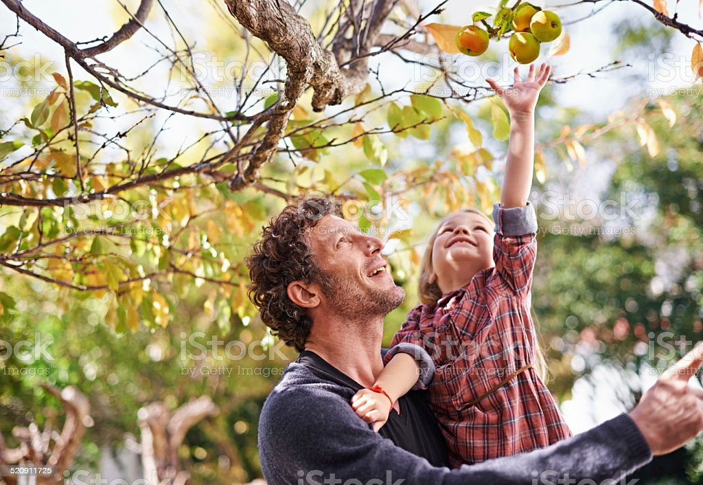 I want that one dad! Shot of a cute little girl picking apples while her dad holds her up to reach them 30-39 Years Stock Photo