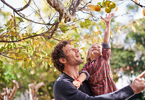 Shot of a cute little girl picking apples while her dad holds her up to reach them