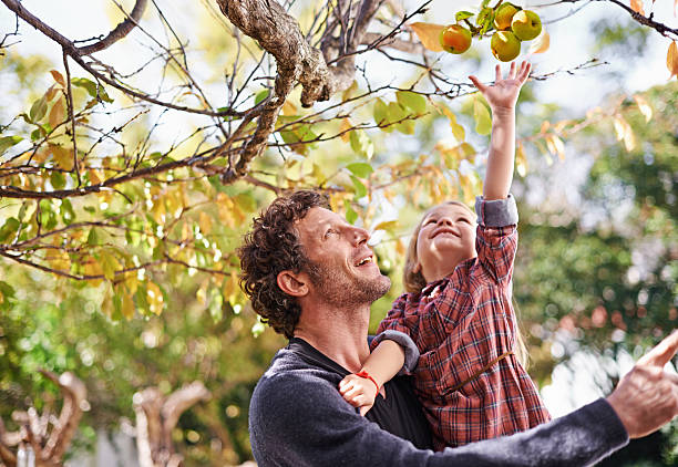 i want that one dad! - picking stock photos and pictures