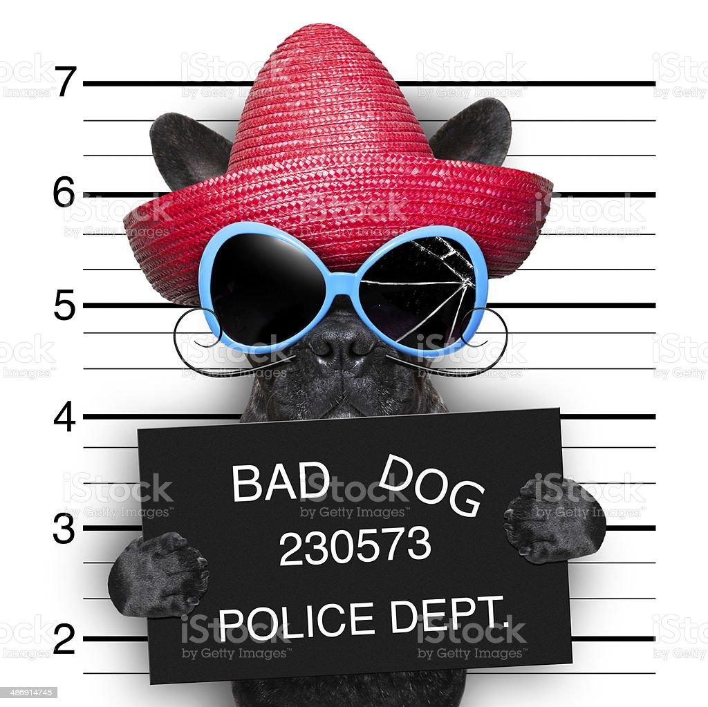 wanted dog stock photo