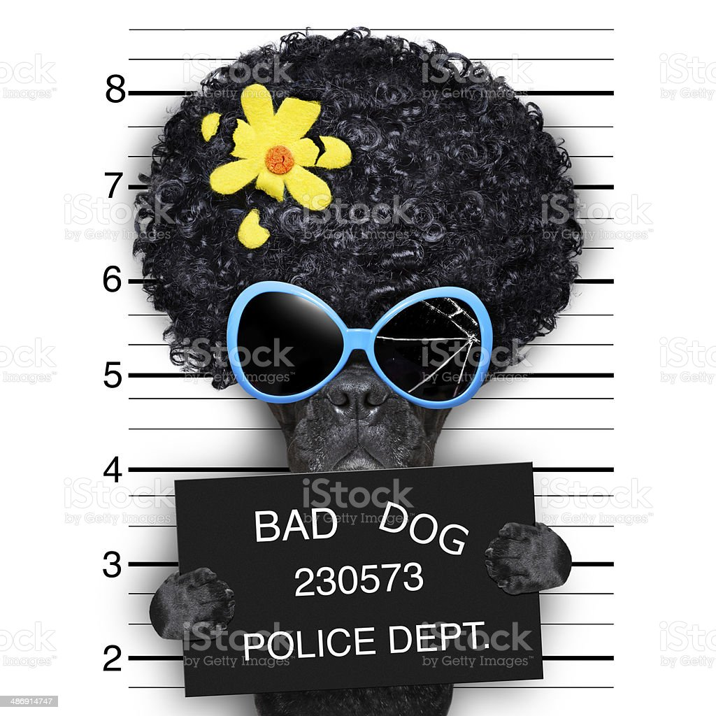 wanted hippie dog stock photo
