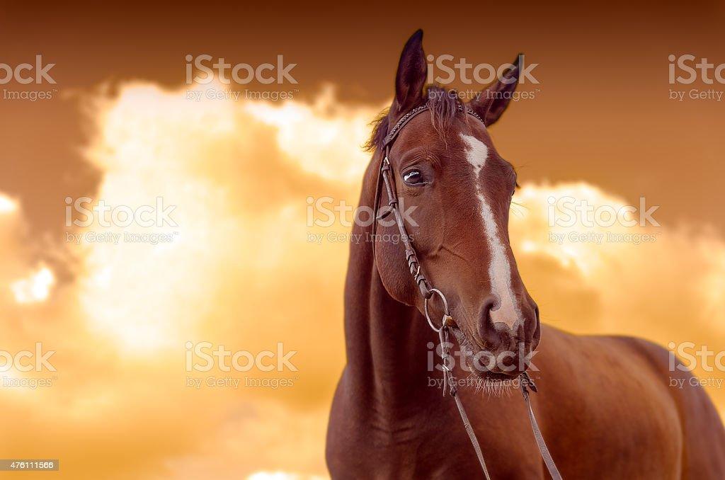 War Horse stock photo