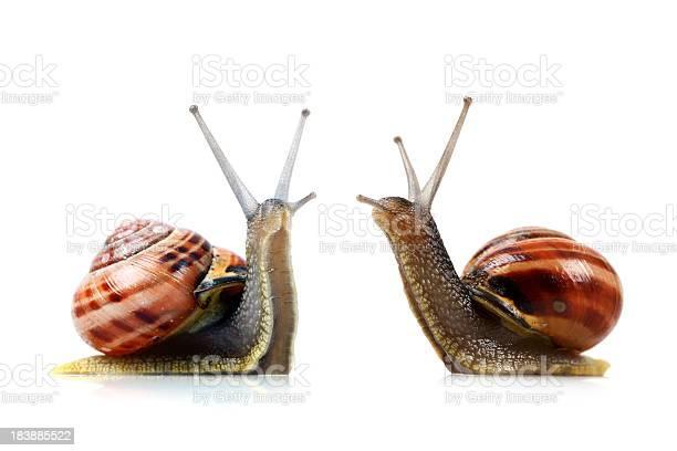 War of the snails picture id183885522?b=1&k=6&m=183885522&s=612x612&h=4mgfzxlp8xr42xrs6djcjf3 yo6lri1grhbypdeeu9q=