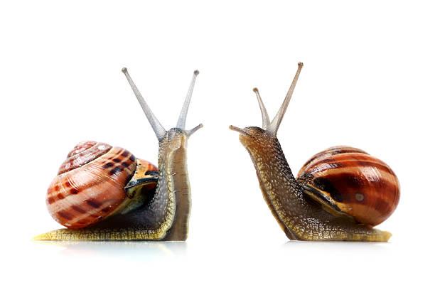 wojna z ślimaki - ślimak gastropoda zdjęcia i obrazy z banku zdjęć