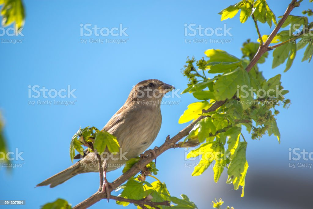 Warbler in the wood stock photo