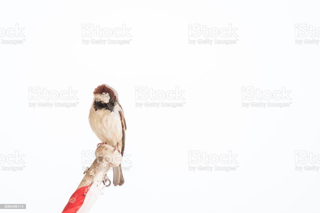 warbler wood island White scene stock photo
