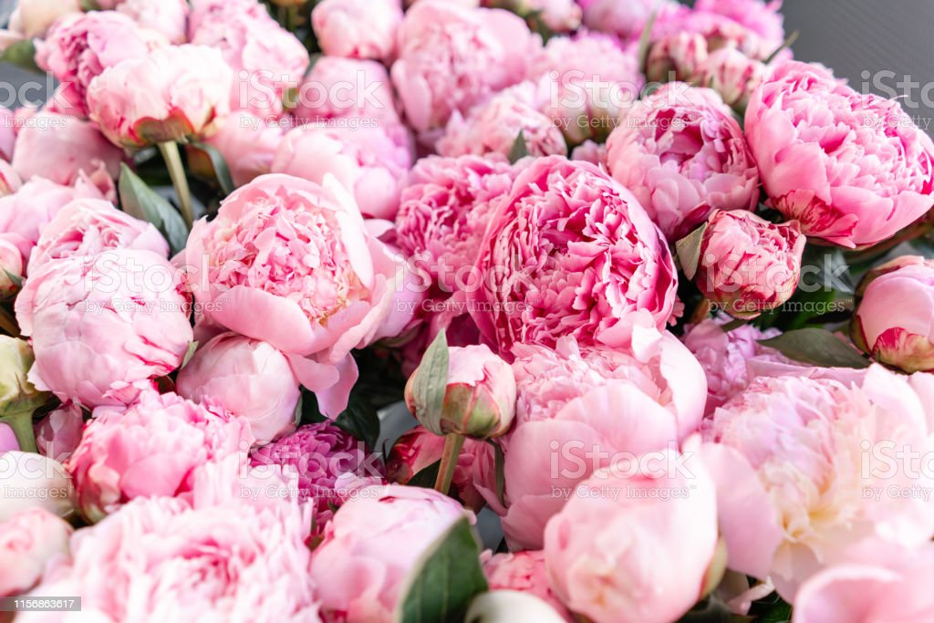 Warehouse refrigerator, Wholesale flowers for flower shops. Pink...