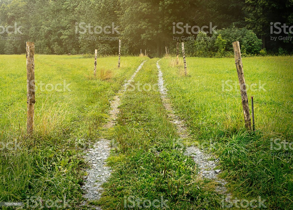 Warm and fresh beaten track through meadow with rays of ligh stock photo