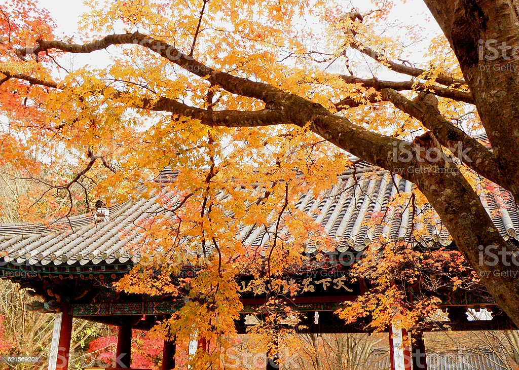 Warm colors of fall foliage against the roof of temple photo libre de droits
