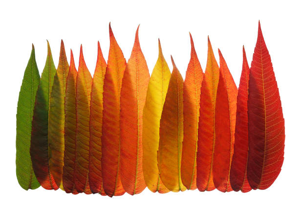 Warm colours of autumn leaves stock photo