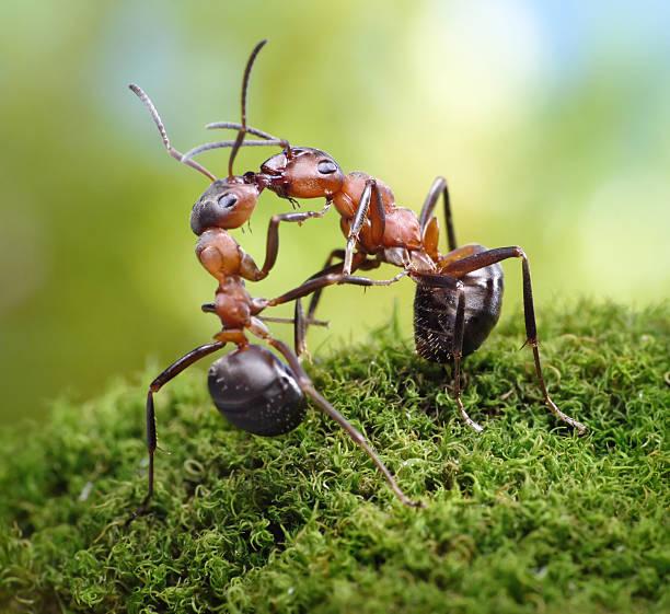 Herzliche Grüße von Ameisen – Foto