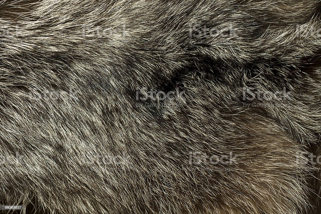 Warm polar Fox fur. Useful as background royalty-free stock photo