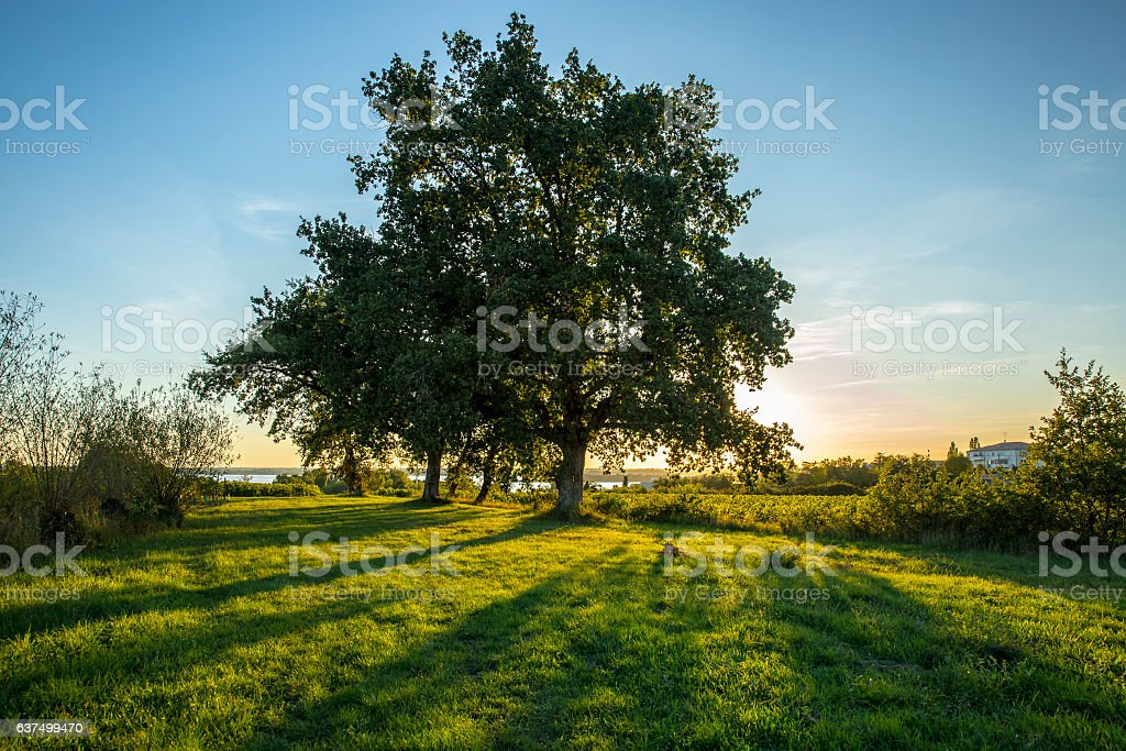 warm spring sunset rays going thorugh tree leaves stock photo