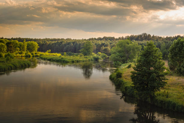 warm summer evening. beautiful view of the river with grassy coasts, trees and dense forest under the cloudy sky in the warm sunset lighting - białoruś zdjęcia i obrazy z banku zdjęć