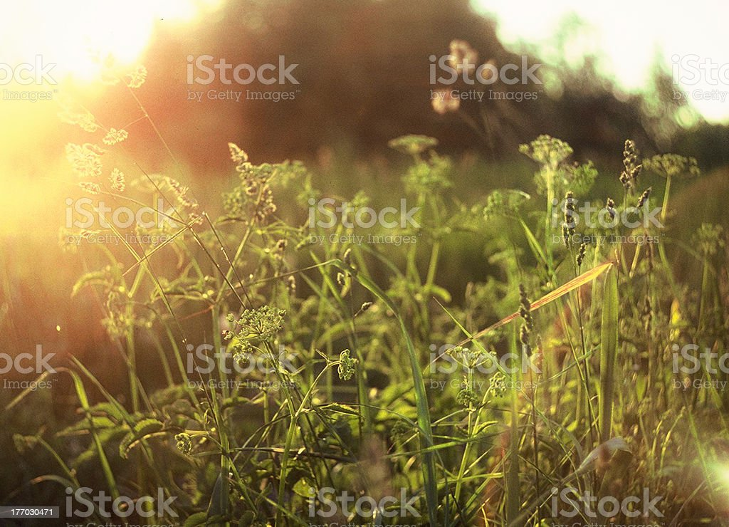 Warm summer evening royalty-free stock photo