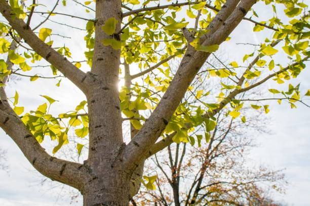 Warm sun back lights a tree stock photo