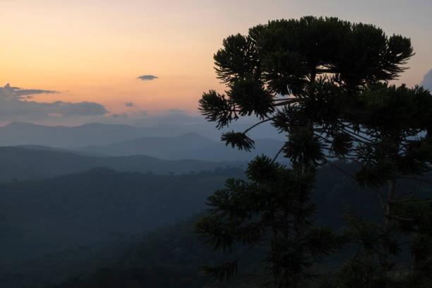 Warm sunset on mountain peak looking at a araucária tree stock photo