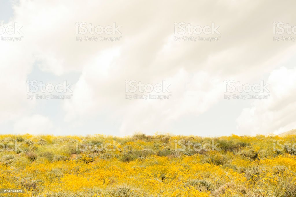 Warm tone Spring flowers with sky stock photo
