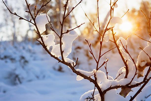 warm winter sun - januari bildbanksfoton och bilder