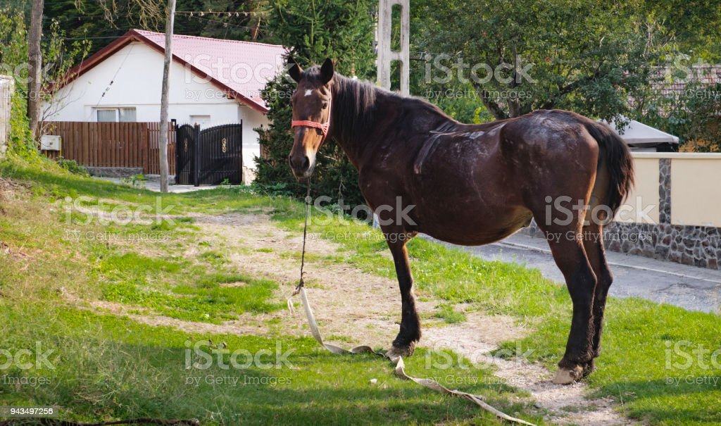 Warmblood horse stands on a path to the house stock photo