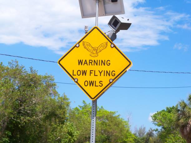 Warning Low Flying Owls Sign stock photo